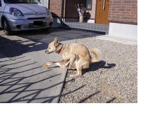 hundar bortskänkes stockholm