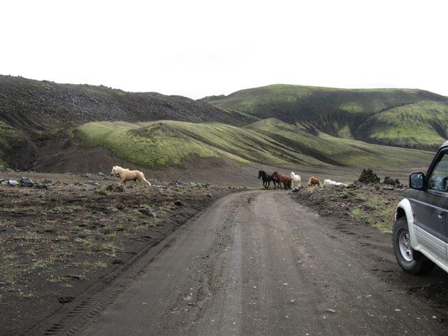Name:  Island 2007-1 661 hester p veien.JPG Views: 4737 Size:  49.4 KB